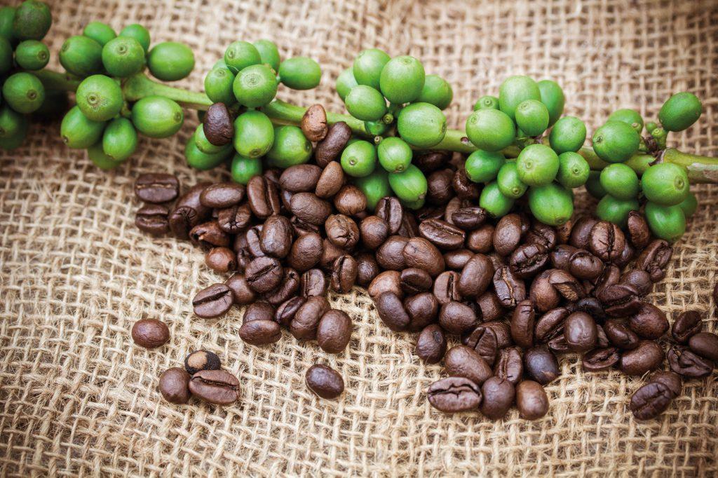 Wissenswertes | Kaffeebohnen auf Jute